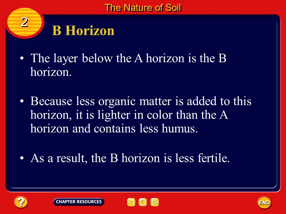 A Horizon The A horizon is the top layer of soil. 2 2 The Nature of Soil In a forest, the A horizon might be covered with litter. Litter consists of l