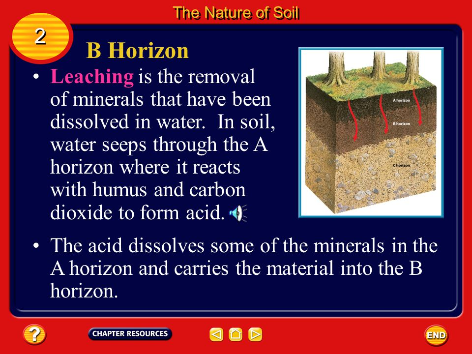 B Horizon The layer below the A horizon is the B horizon. 2 2 The Nature of Soil Because less organic matter is added to this horizon, it is lighter i