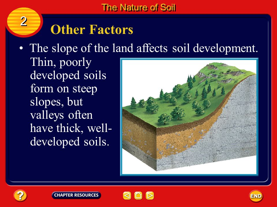 Other Factors Time also affects soil development. 2 2 The Nature of Soil If weathering has been occurring for only a short time, the parent rock deter