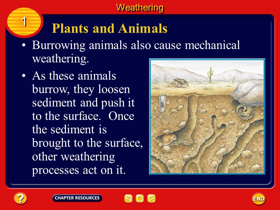 Climate is the pattern of weather that occurs in a particular area over many years.