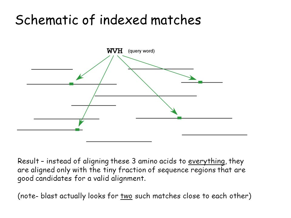 Schematic of indexed matches Result – instead of aligning these 3 amino acids to everything, they are aligned only with the tiny fraction of sequence regions that are good candidates for a valid alignment.