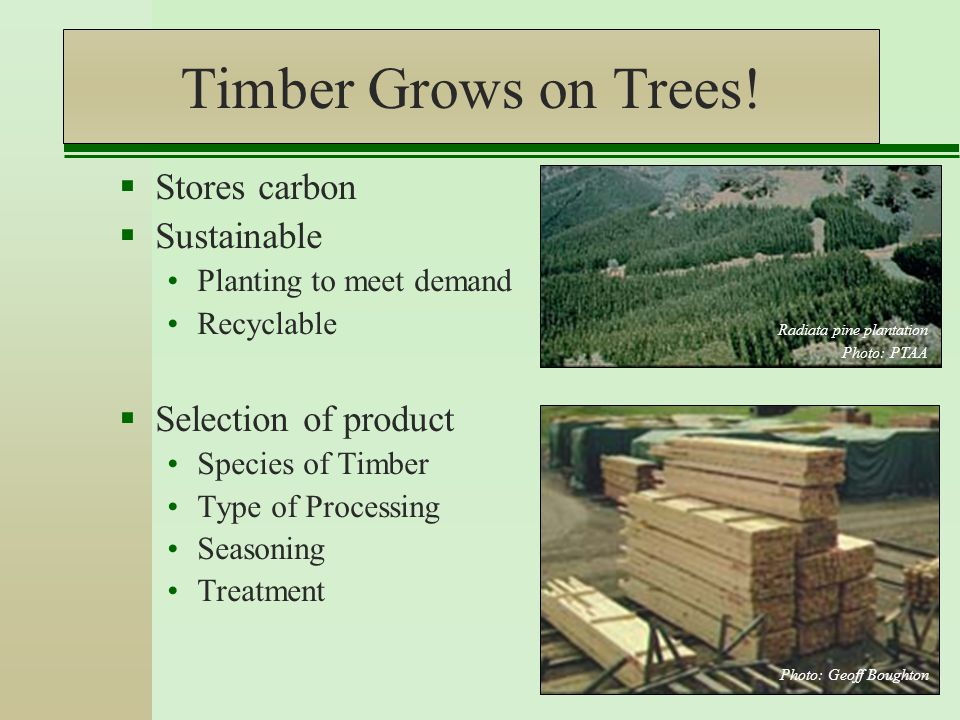 Timber Grows on Trees.