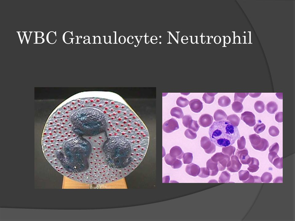 WBC Granulocyte: Neutrophil
