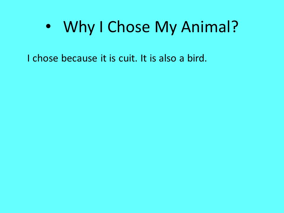 Why I Chose My Animal I chose because it is cuit. It is also a bird.