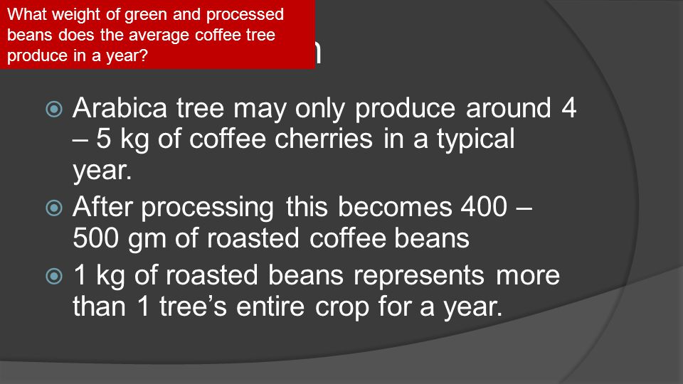 Tree Production  Arabica tree may only produce around 4 – 5 kg of coffee cherries in a typical year.  After processing this becomes 400 – 500 gm of