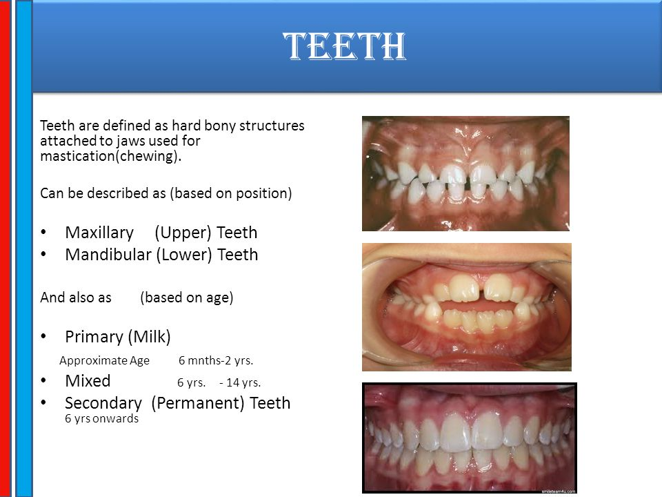 TEETH Teeth are given specific names based on the functions they perform Incisors.