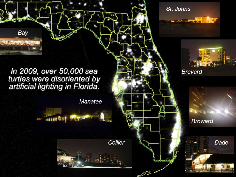 St. Johns Brevard Dade Bay Broward Collier Manatee In 2009, over 50,000 sea turtles were disoriented by artificial lighting in Florida.
