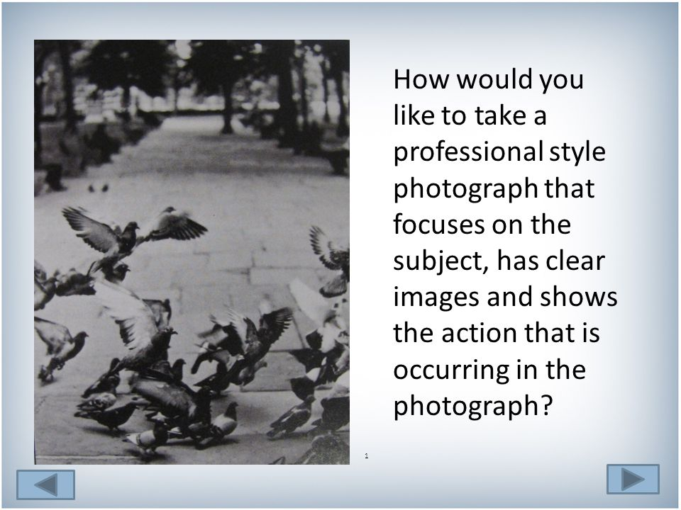 3.The pictures of the pigeons in the park below has a lot going on.