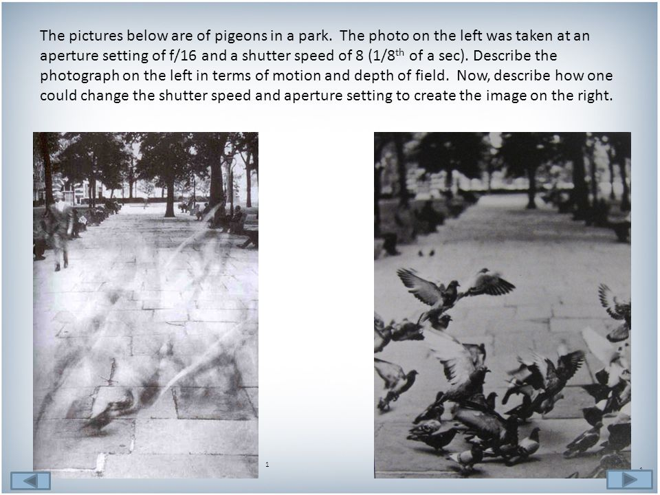 The pictures below are of pigeons in a park.