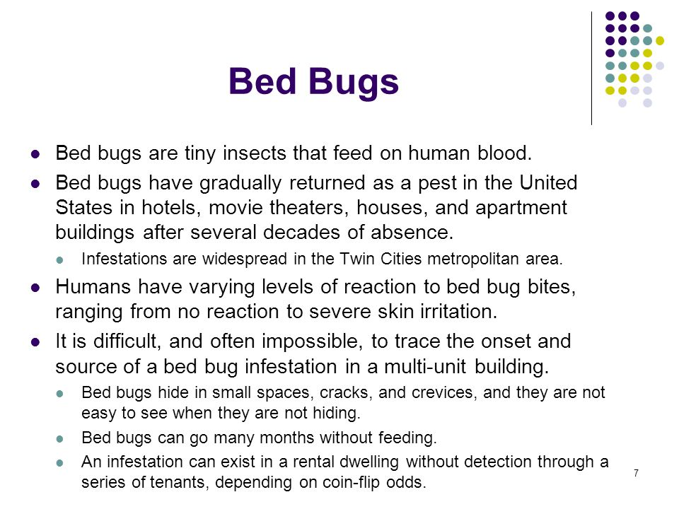 Bed Bugs Bed bugs are tiny insects that feed on human blood.