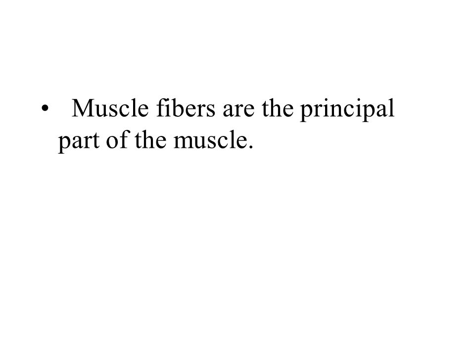 Skeletal Muscle – CT Sheaths Three connective tissue sheaths: Epimysium : surrounding the entire muscle Perimysium : surrounding groups of muscle fibe