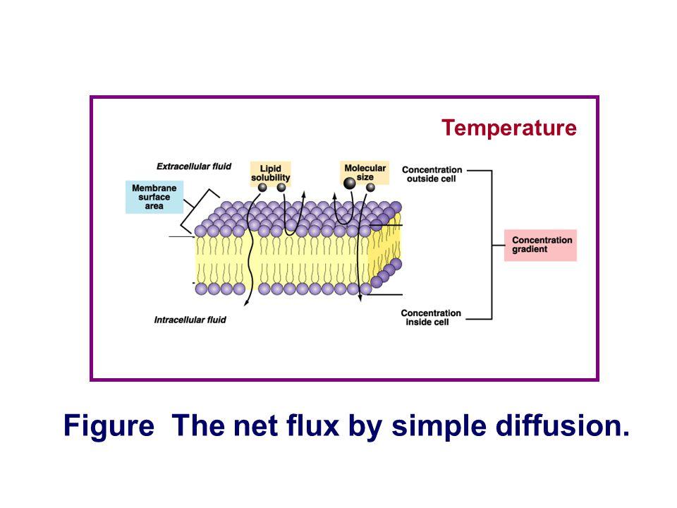 Outside Inside Nonpolar molecules Polar molecules Figure Different permeability across the membrane. The major factor limiting diffusion across a memb