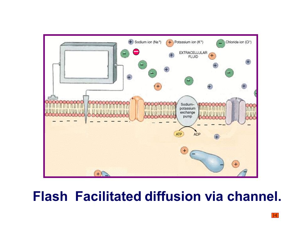 Transport of Substance Through the Cell Membrane Protein-mediated transport Facilitated diffusion via channel Characteristics: ① Charged ions such as
