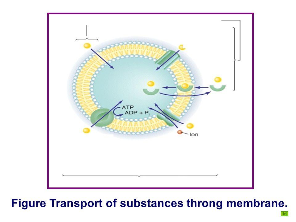 Na + K+K+ ATP ADP Na + G cell H+H+ pump Flash Secondary active transport. Cotransport Countertransport