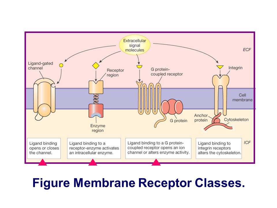 Figure Two kinds of route of signal transduction.