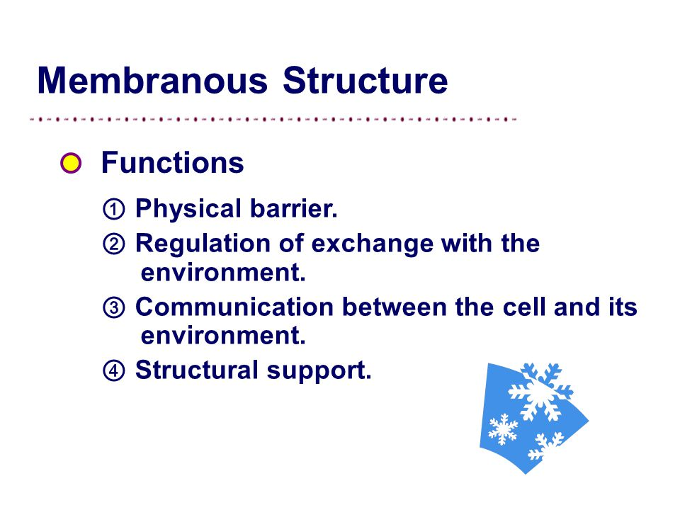 Membranous Structure ① Physical barrier.② Regulation of exchange with the environment.