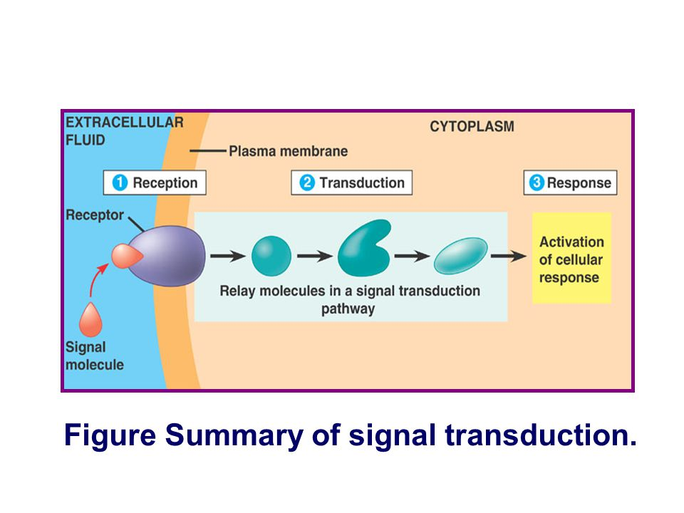 Figure Review of signal transduction.