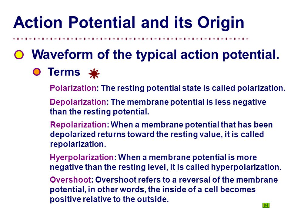 Figure Waveform of the typical action potential. polarization depolarization repolarization hyperpolarization Spike potential After hyperpolarized wav