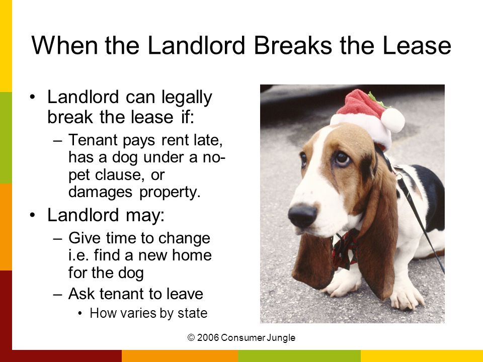 © 2006 Consumer Jungle When the Landlord Breaks the Lease Landlord can legally break the lease if: –Tenant pays rent late, has a dog under a no- pet clause, or damages property.