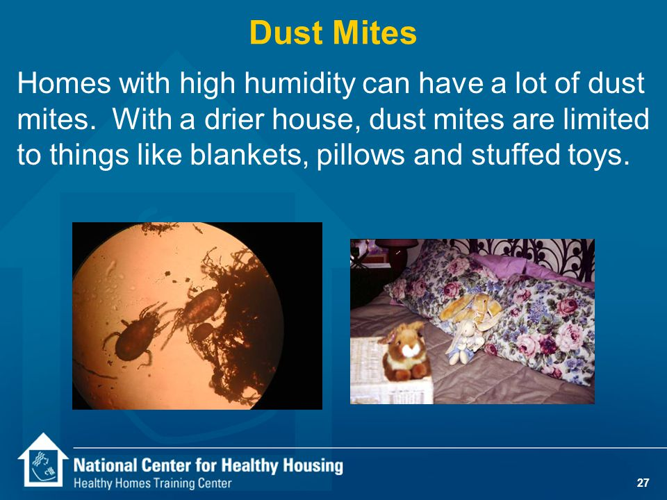 27 Homes with high humidity can have a lot of dust mites. With a drier house, dust mites are limited to things like blankets, pillows and stuffed toys