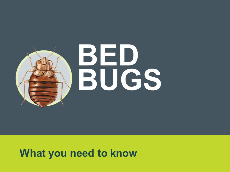 What you need to know BED BUGS