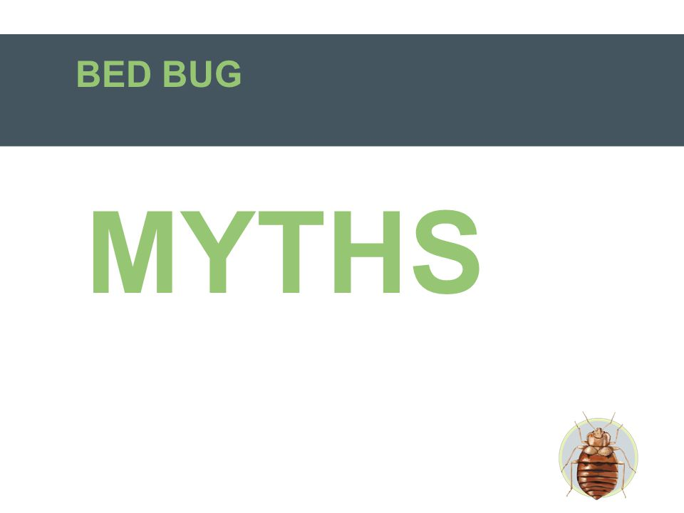 BED BUG MYTHS