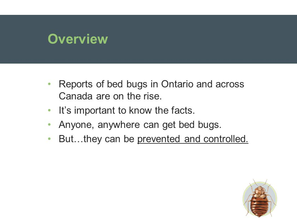 Overview Reports of bed bugs in Ontario and across Canada are on the rise.