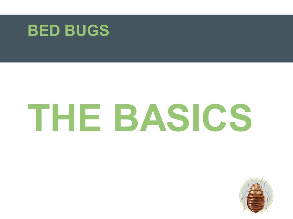 BED BUGS THE BASICS