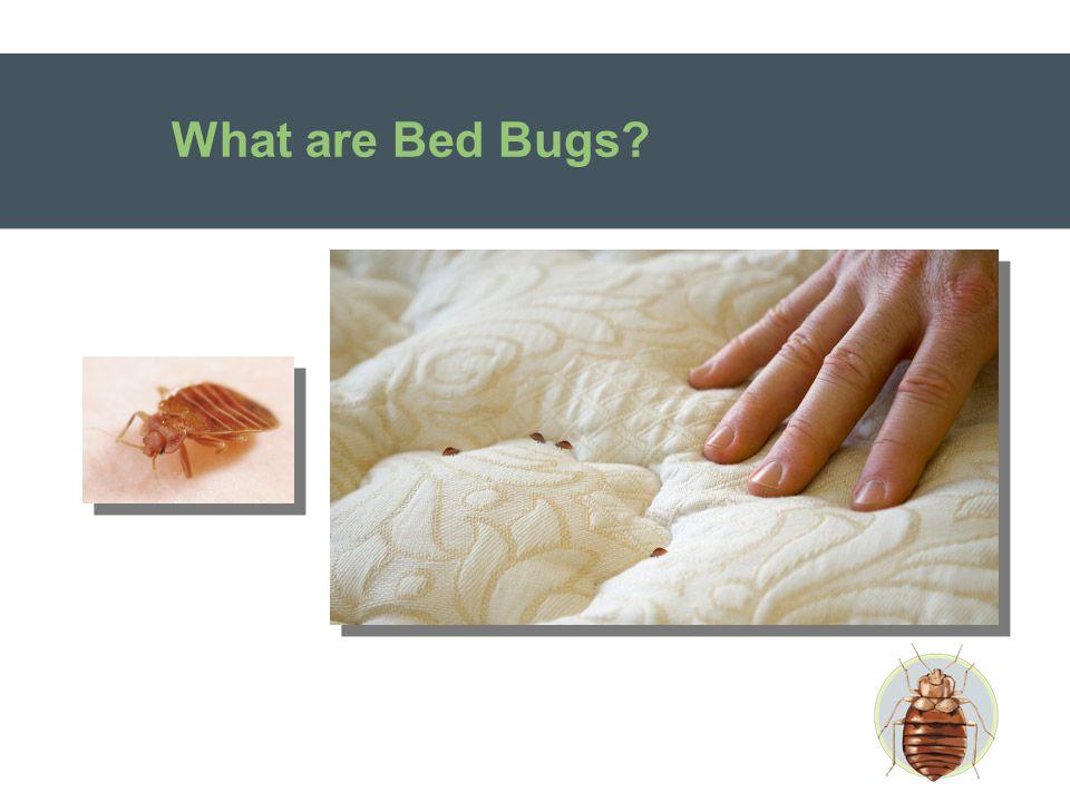 Bed Bugs Do Bite