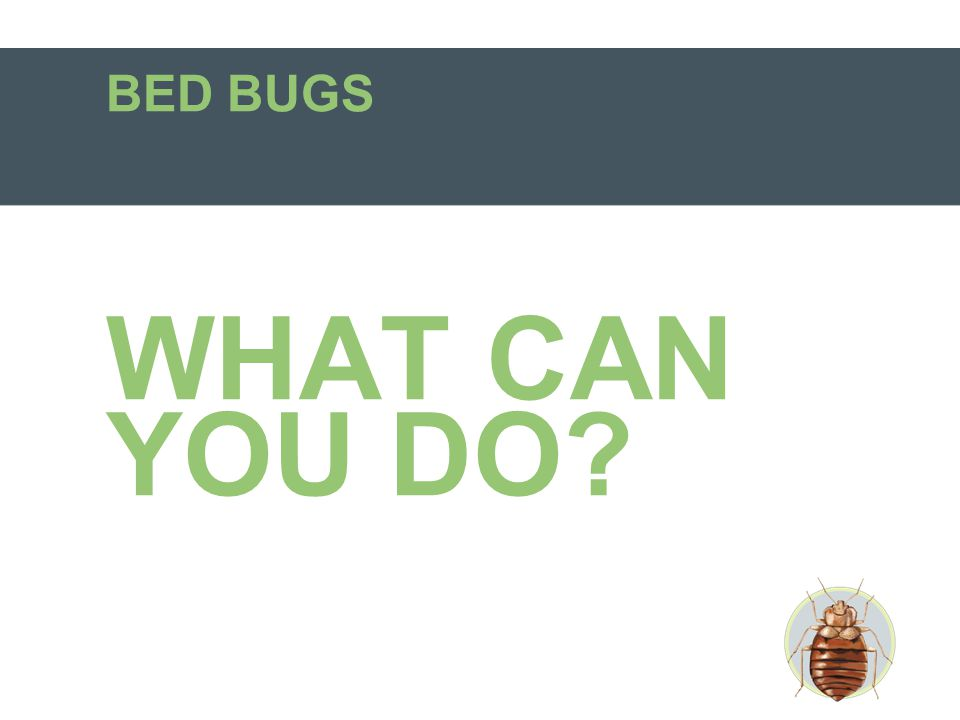 Myth #6 There are over-the-counter treatments available for bed bugs.