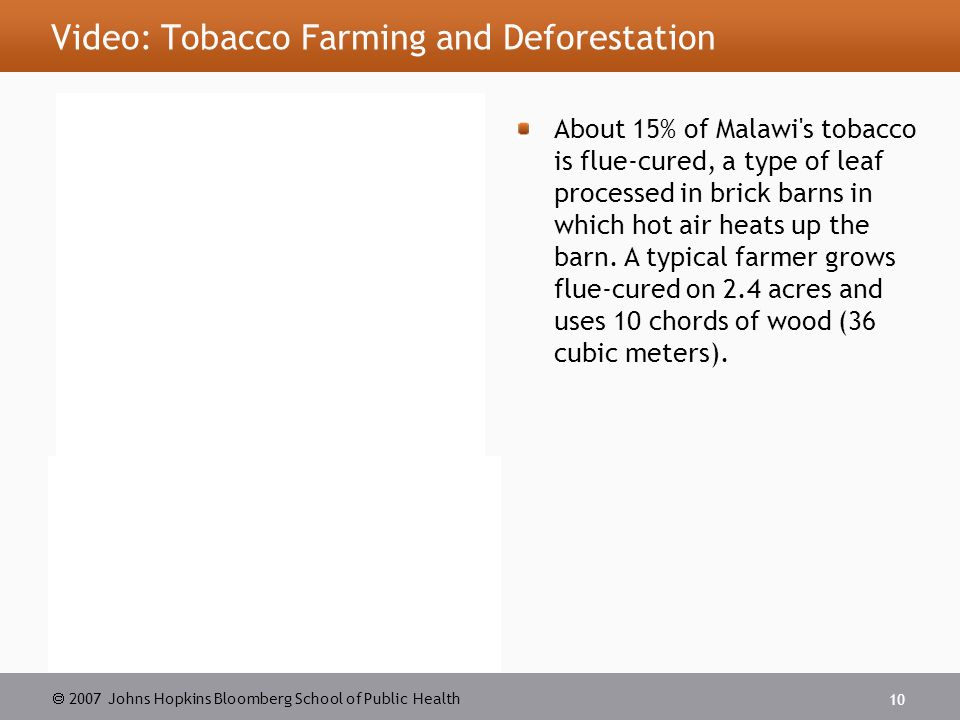  2007 Johns Hopkins Bloomberg School of Public Health 10 Video: Tobacco Farming and Deforestation About 15% of Malawi s tobacco is flue-cured, a type of leaf processed in brick barns in which hot air heats up the barn.