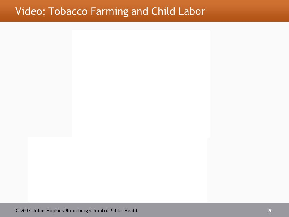  2007 Johns Hopkins Bloomberg School of Public Health 20 Video: Tobacco Farming and Child Labor