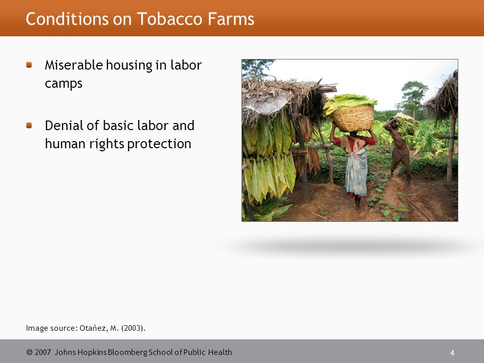  2007 Johns Hopkins Bloomberg School of Public Health 15 BAT and Contract Farming BAT obtains tobacco from 250,000 tobacco farmers worldwide through contract farming and other arrangements 65% of BAT's global leaf requirements are sourced from BAT's own vertically integrated operations, which also play a role as the third largest global leaf export supplier Worldwide BAT uses $40 million worth of tobacco each week Sources: BAT annual reports and accounts.