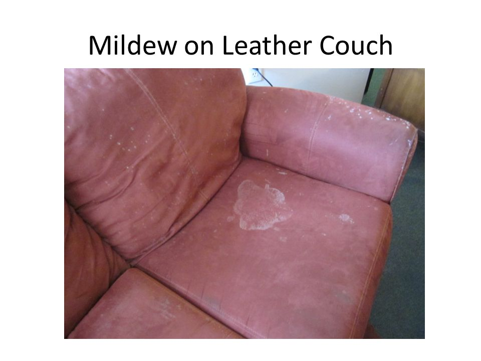 Mildew on Leather Couch