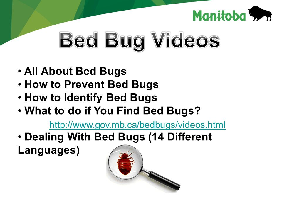 http://www.gov.mb.ca/bedbugs/videos.html All About Bed Bugs How to Prevent Bed Bugs How to Identify Bed Bugs What to do if You Find Bed Bugs? Dealing