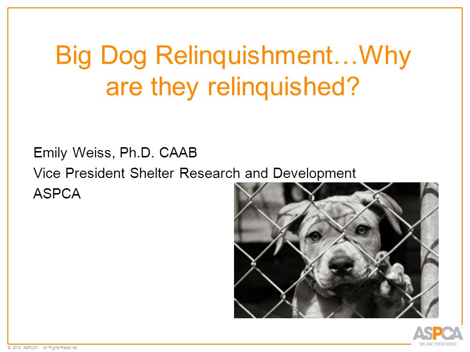 © 2012 ASPCA ®. All Rights Reserved. Big Dog Relinquishment…Why are they relinquished.