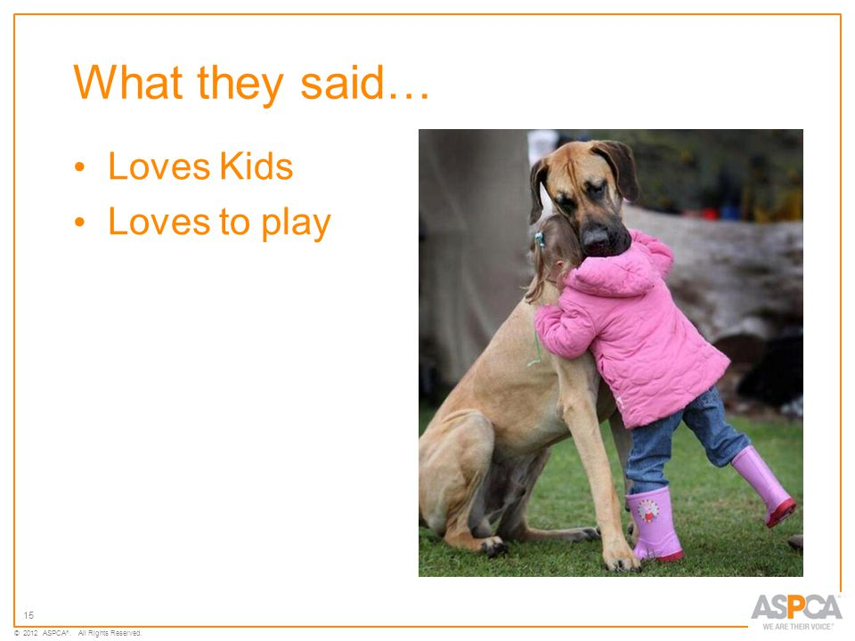 15 © 2012 ASPCA ®. All Rights Reserved. What they said… Loves Kids Loves to play