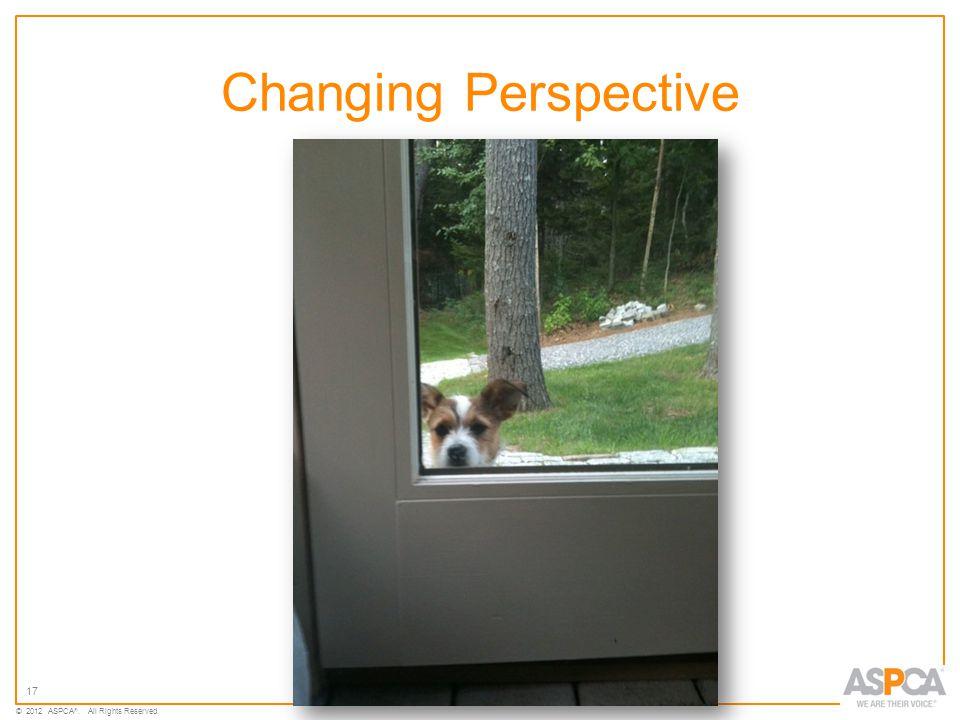 17 © 2012 ASPCA ®. All Rights Reserved. Changing Perspective