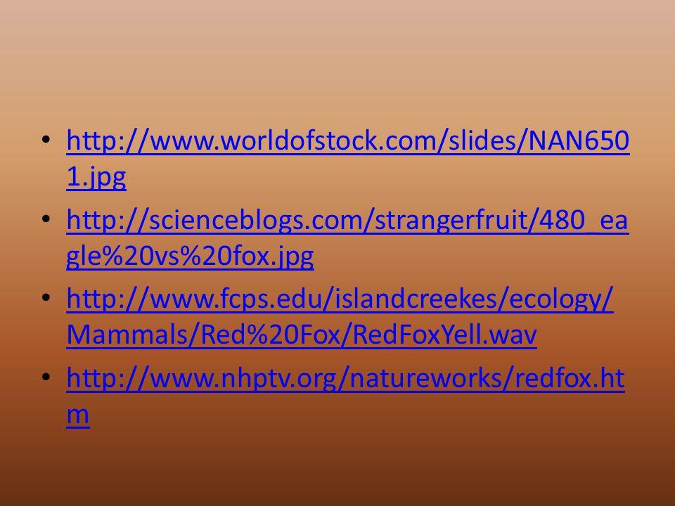 http://www.worldofstock.com/slides/NAN650 1.jpg http://www.worldofstock.com/slides/NAN650 1.jpg http://scienceblogs.com/strangerfruit/480_ea gle%20vs%20fox.jpg http://scienceblogs.com/strangerfruit/480_ea gle%20vs%20fox.jpg http://www.fcps.edu/islandcreekes/ecology/ Mammals/Red%20Fox/RedFoxYell.wav http://www.fcps.edu/islandcreekes/ecology/ Mammals/Red%20Fox/RedFoxYell.wav http://www.nhptv.org/natureworks/redfox.ht m http://www.nhptv.org/natureworks/redfox.ht m