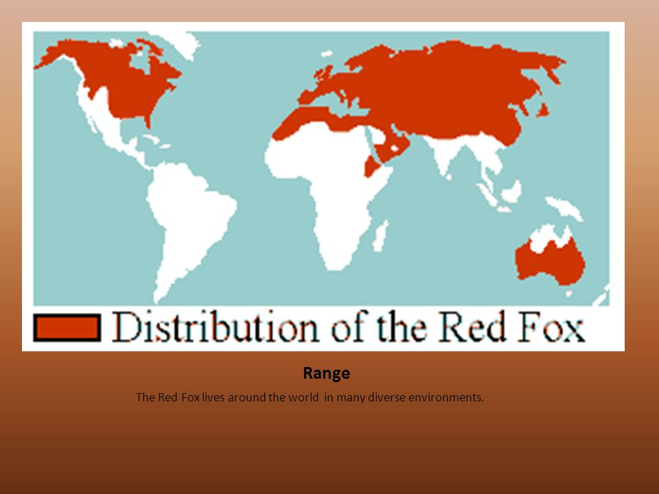 Range The Red Fox lives around the world in many diverse environments.