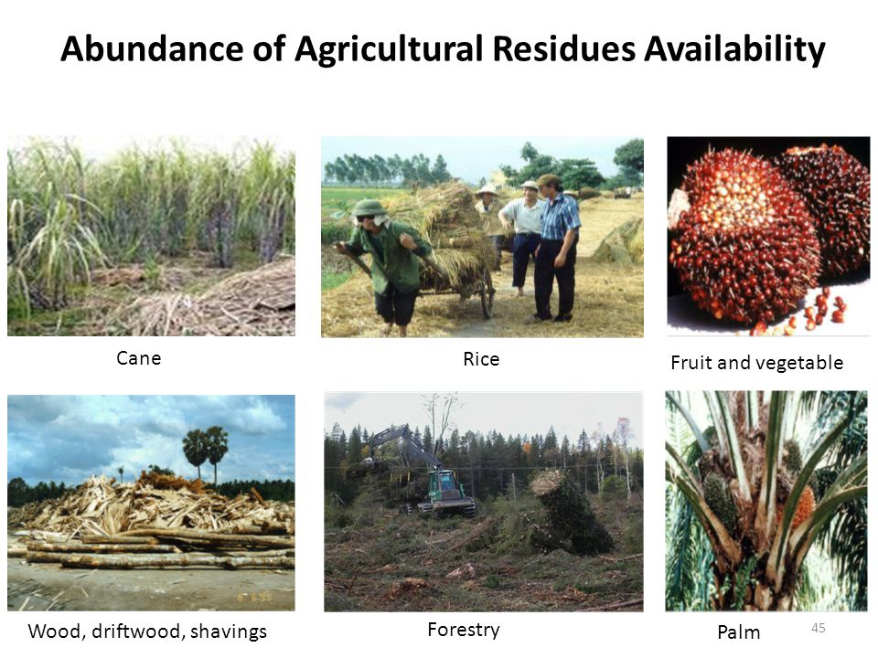 Abundance of Agricultural Residues Availability Cane Rice Fruit and vegetable Palm Forestry Wood, driftwood, shavings 45