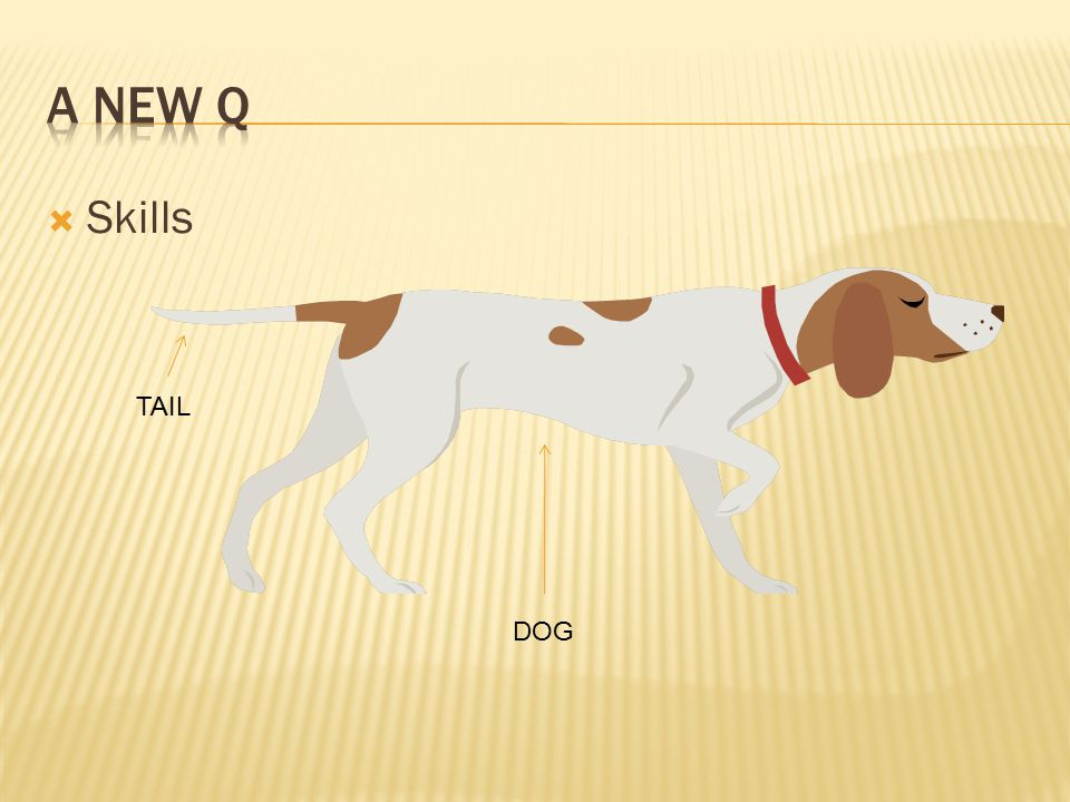  Skills DOG TAIL