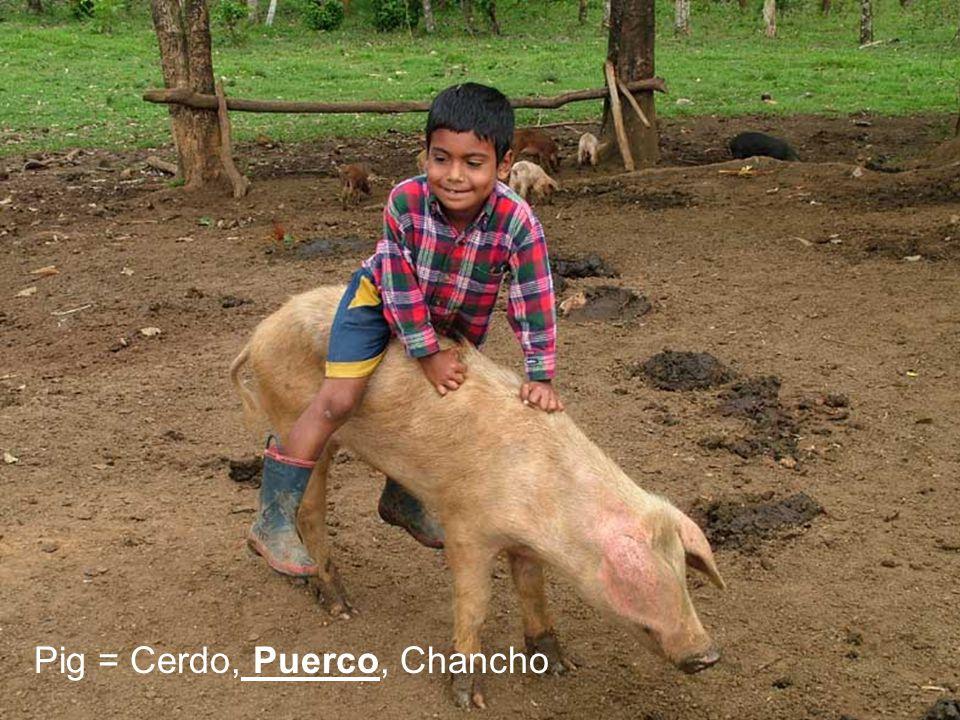 Pig = Cerdo, Puerco, Chancho