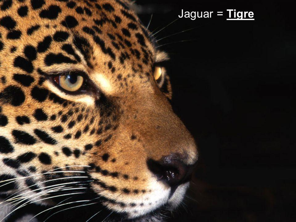 Jaguar = Tigre