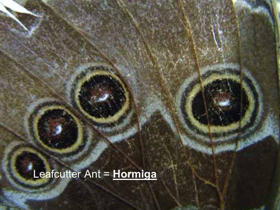 Leafcutter Ant = Hormiga