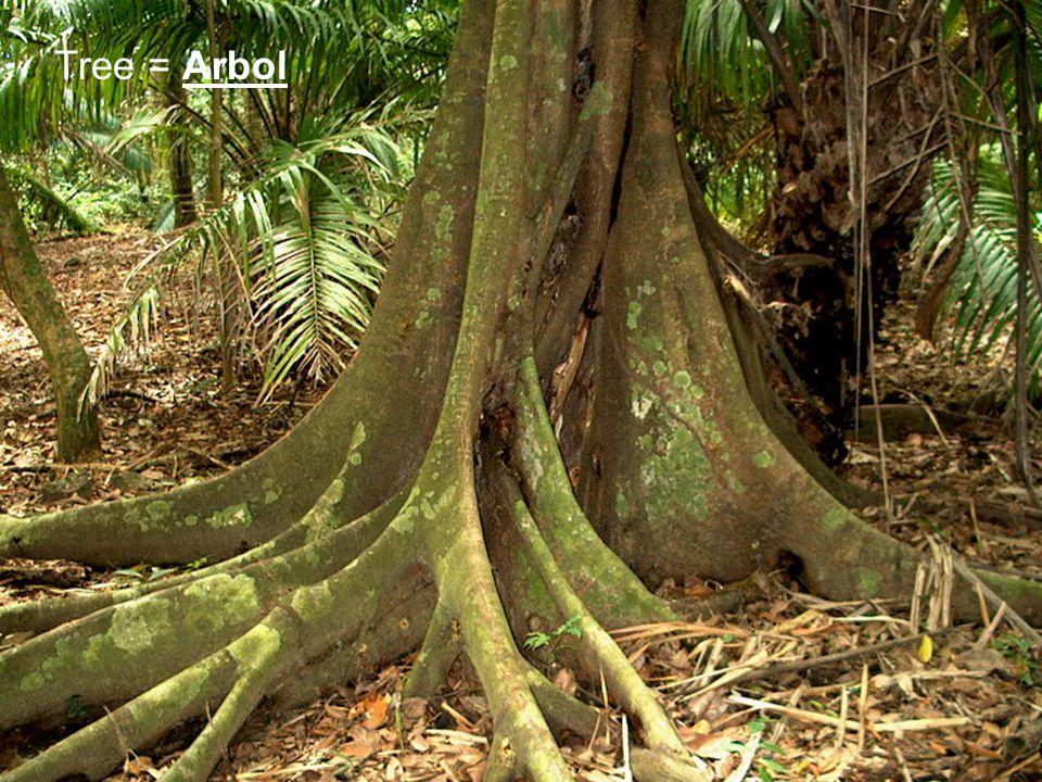 Tree = Arbol