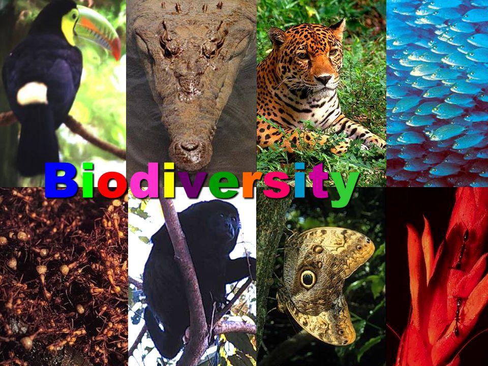 BiodiversityBiodiversityBiodiversityBiodiversity