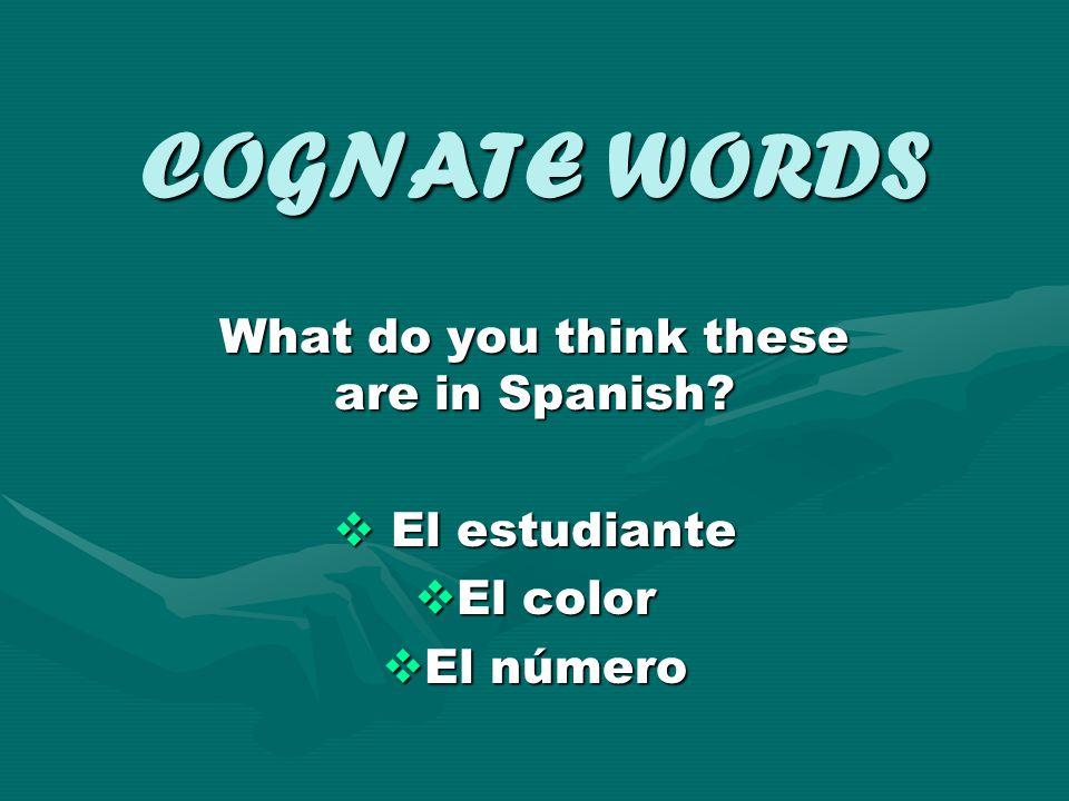 COGNATE WORDS Let's look at some examples: elefante/elephantelefante/elephant computadora/computercomputadora/computer televisión/televisiontelevisión/television