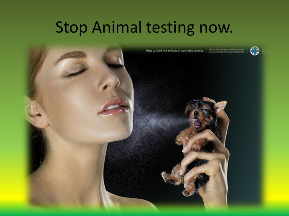 Stop Animal testing now.