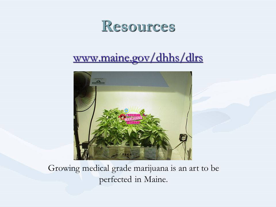 Resources www.maine.gov/dhhs/dlrs Growing medical grade marijuana is an art to be perfected in Maine.